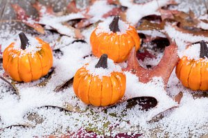 Early snow on pumpkins
