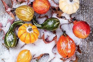 Gourds and Snow