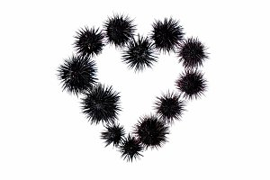 Heart shape made from sea urchin