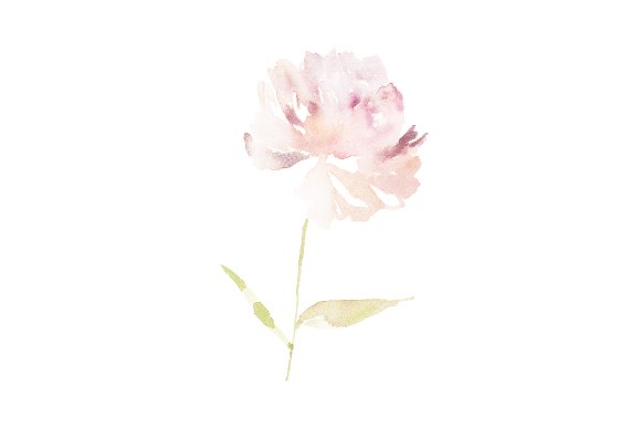 Peony Light Watercolor