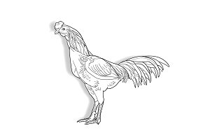 Drawing of cock