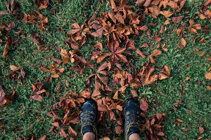 Sport shoes in autumn leaves