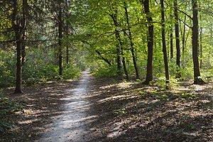 Wonderful Forest Path