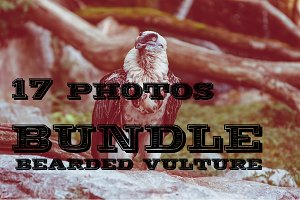 17 Photo Bundle - Bearded Vulture