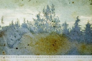 Forest Trees Stained Paper