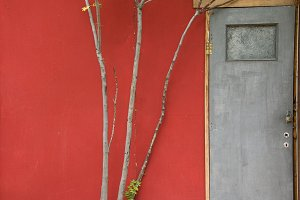 Door Tree Branches