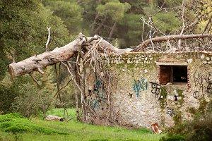 Fallen Tree Old House