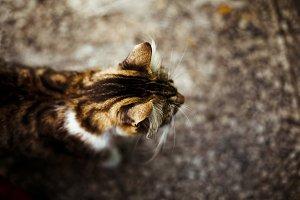 the cat ears
