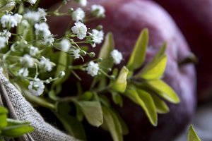 Baby's Breath and Apples