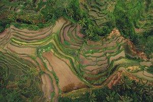 Rice paddy terraced fields