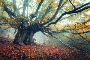 Autumn foggy forest