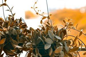 Nature of decor plants