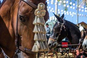 fair of Utrera in Seville