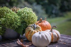 Hydrangeas and assorted pumpkins