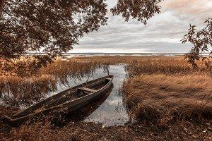 yellow autumn coast