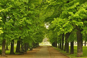 European city park