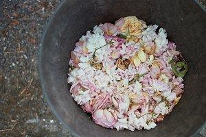 A photo of rose petals I
