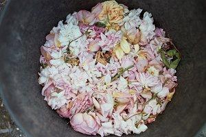a film photo of rose petals