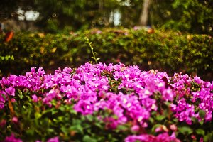 flowers beautiful background