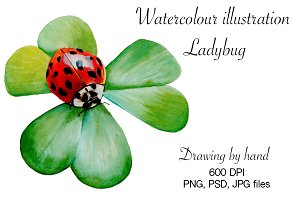 Watercolour illustration ladybug