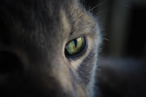 Closeup of Cat's Eye