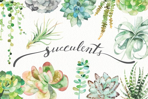 watercolor succulent set