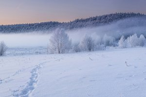 Panorama of fog in winter forest