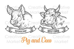 Cow and Pig hand drawn illustration