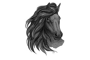 Black mustang stallion sketch