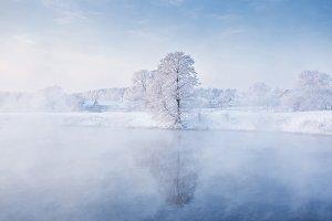 Frozen winter tree