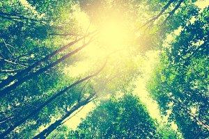 fresh green forest