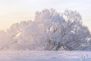 frozen sunny morning