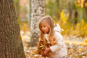 Little girl collects fallen leaves