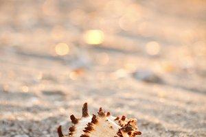 Shell on sea sand
