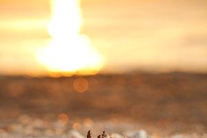 Shell on sunset