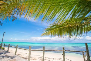 Tropical beach with palms and white sand on Caribbean