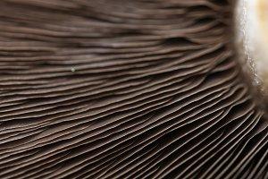 Mushroom lamelae