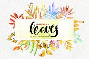 Watercolor leaves, branches png