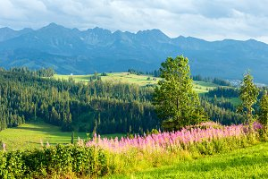 Summer mountain country view
