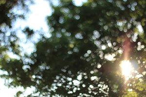 Sunlight Bokeh