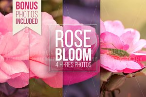 Rose Bloom Photo Pack