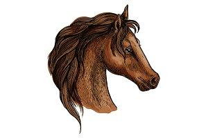 Brown horse head profile