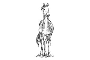 Standing white horse sketch