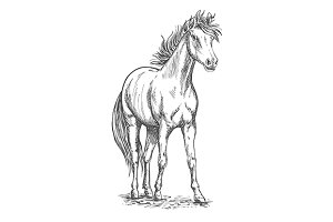 Racehorse sketch of arabian horse