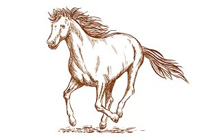 Brown running horse sketch