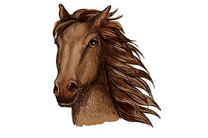 Brown racehorse stallion sketch