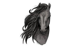 Black mare horse