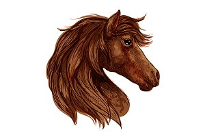 Brown horse head sketch