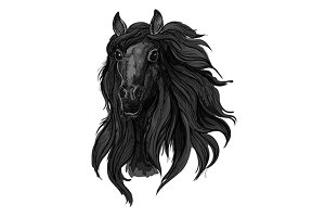 Black arabian racehorse sketch