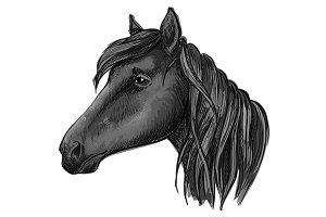 Black riding horse sketch